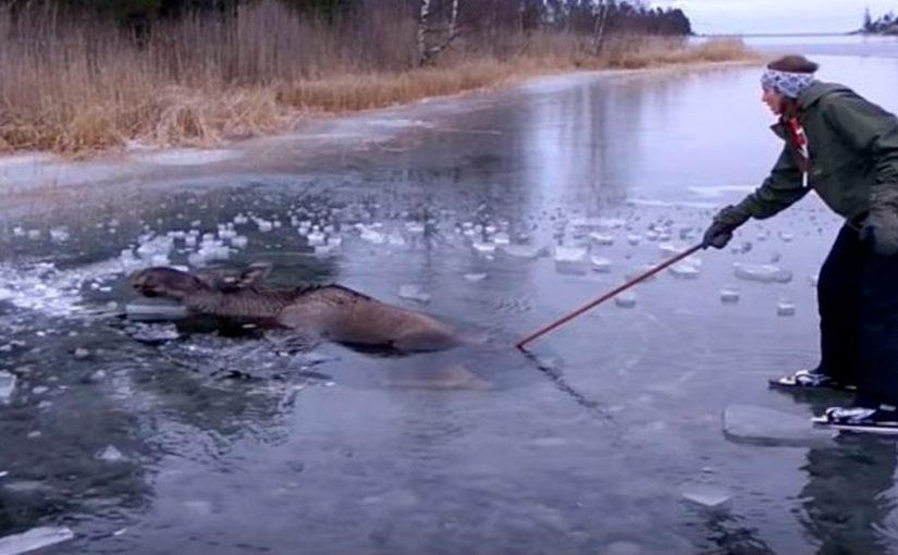 Он катался на льду, когда заметил странное существо. Теперь он стал героем